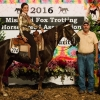 That's Jest Jessie, 2016 3 Year Old Futurity Open Am Mares Champion