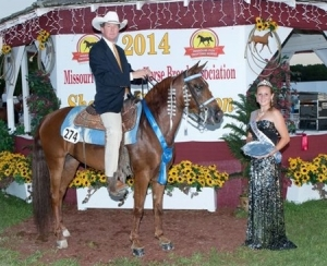 Lady Antebellum, Shown by: Kent Hyde - 2014 Amateur 3 Yr Old World Champion