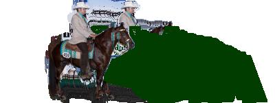 stallion_banner