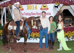 Wild West, Shown by: Jarrod Freeman - 2014 World Champion 5 Yrs & Older Stallion