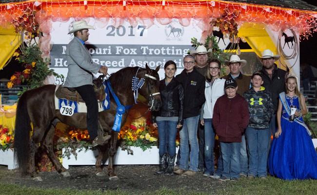 CIA, 2017 Open 5 Years & Older World Champion Stallion