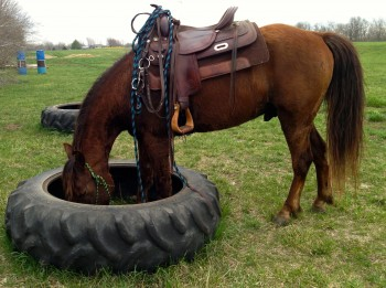 Lucky in the Tire