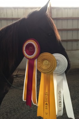 Where did these ribbons come from?  I've not been in a horse show for months.