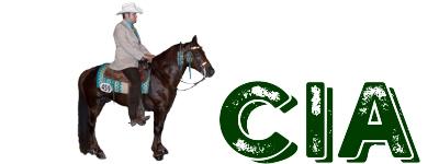 Missouri Fox Trotting Stallion